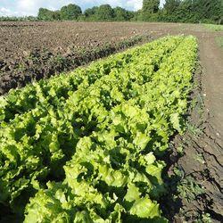 LA FERME DES TOURNELLES - AUVERS SUR OISE - La ferme en action - Legumes a auvers sur oise